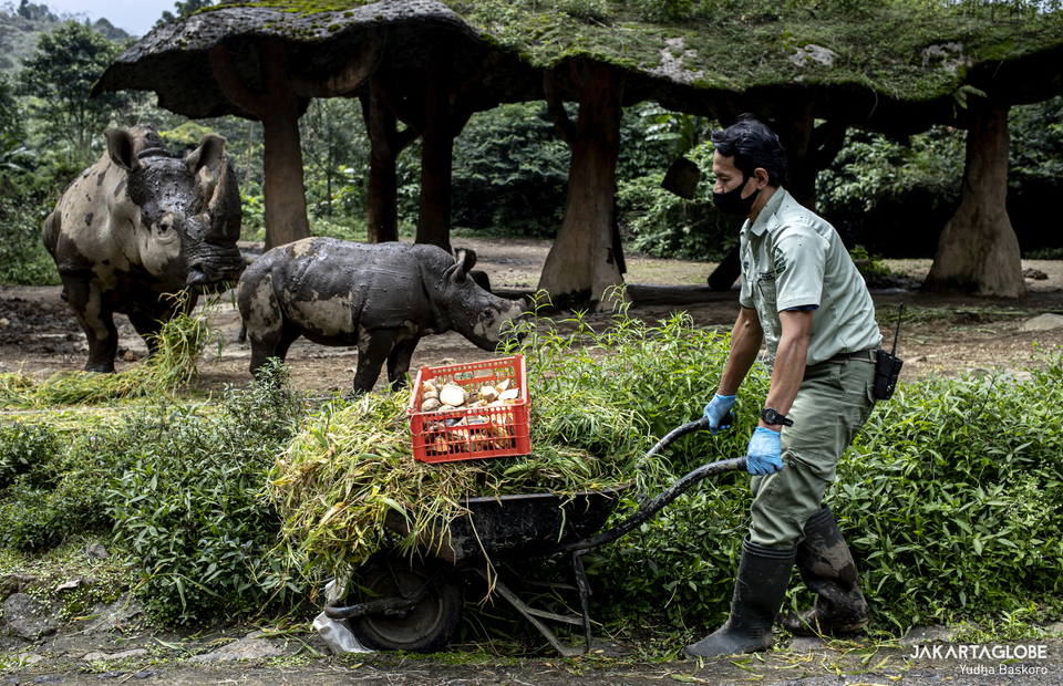 Poniran carries a cart full of additional food such as nuts, carrots, leaves, bananas, and grass at Taman Safari Indonesia, in Bogor, West Java on Jan, 25, 2021. (JG Photo/Yudha Baskoro)