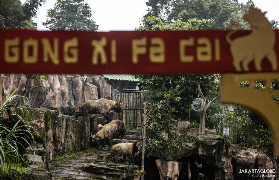 Chinese new year greeting is seen in front of takin shed at Taman Safari Indonesia in Bogor, West Java on Feb, 5, 2021. (JG Photo/Yudha Baskoro)