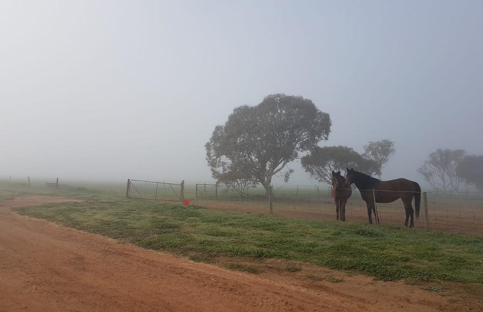 Horses stand around on a cold winter morning at Amaroo farm, Muntadgin, Western Australia. (JG Photo/Meleva Thorn)