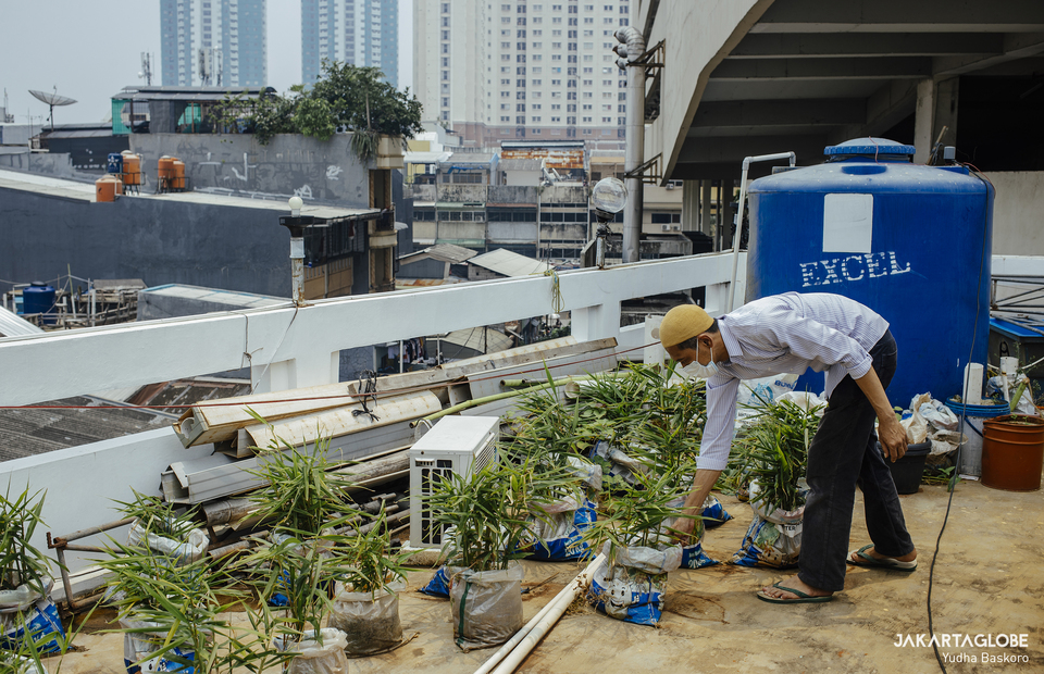 Yayan also plants other vegetables at the top of Baitussalam Mosque in West Jakarta on March 18, 2021. (JG Photo/Yudha Baskoro)